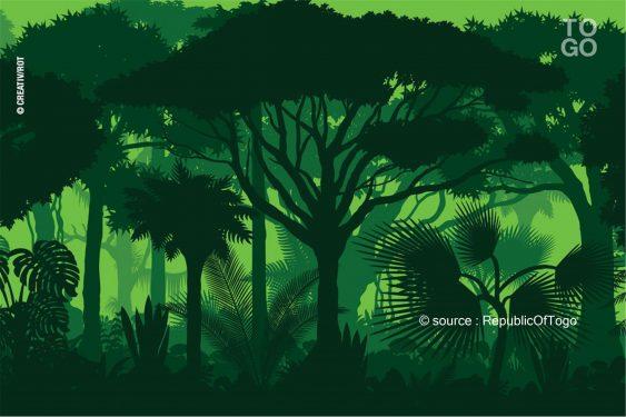 *Republic Of Togo* : La forêt mérite toutes les attentions