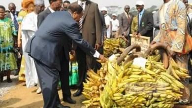 Photo de Cameroun: la filière banane à la peine