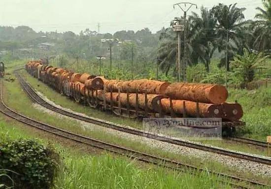 Bille de bois entrain d'être transportée