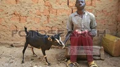 Photo de Cameroun : Un homme surpris en plein ébats sex'uels avec une chèvre