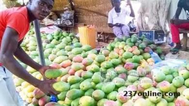 Photo of Cameroun: Les mangues envahissent les étals des marchés a Maroua