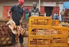 Vendeurs de Poulets