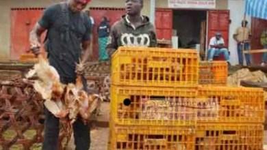 Photo de Cameroun: Le COVID-19 fait chuter le prix du poulet