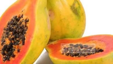 Photo of Papaye: Le gage d'une bonne santé intestinale