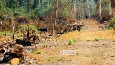 Photo of Cameroun – Agriculture: Tarifs appliqués aux indemnisations pour cause d'utilité publique