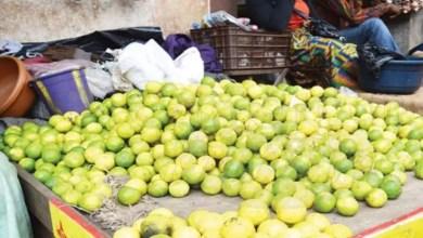 Photo of Covid-19 : Le prix du citron en hausse à l'Ouest Cameroun