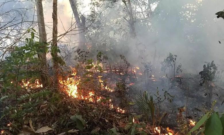 Amazonie en feu