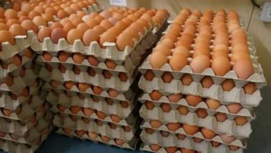 Photo of Cameroun – Panier de la ménagère : Des œufs frais à vil prix