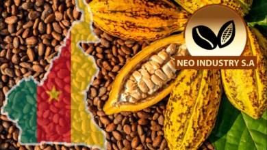 Photo of Agriculture : le prix du cacao chute en deçà de 1000 frs CFA le kilogramme