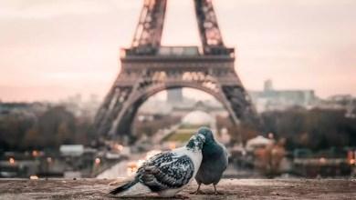 Des pigeons à la Tour Eifel