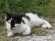 Et bette skravl af en kat i Jersore