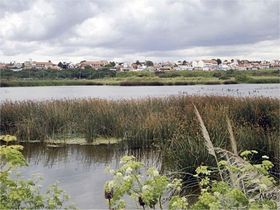 reserva_natural_puerto_mar_del_plata laguna