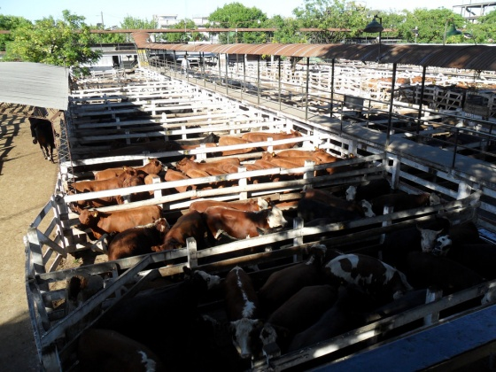 Trasladarán el Mercado de Hacienda a La Matanza