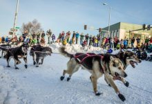 Photo of With lack of snow in Southcentral Alaska, Iditarod officials consider moving restart north to Fairbanks