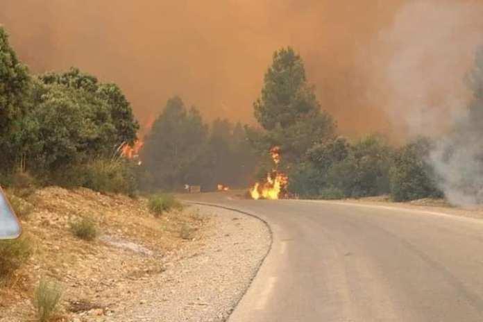 Feux de forêt: Plus de 1500 hectares partis en fumée à Khenchela, pas de pertes humaines