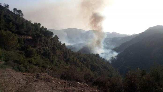 Les espaces forestiers constituent près de 60% de la superficie incendiée, selon la direction générale des forêts