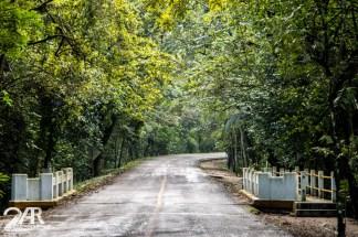 Dschungel von Palenque