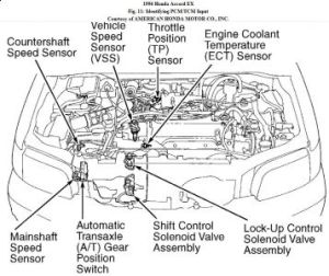 1996hondaaccordenginediagram Images  Frompo  1