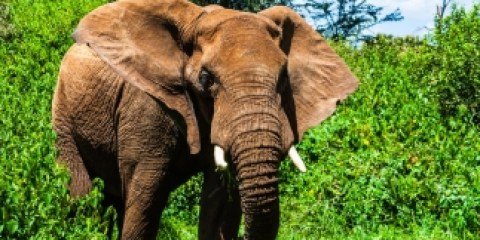 Elefant im Samburu Nationalpark