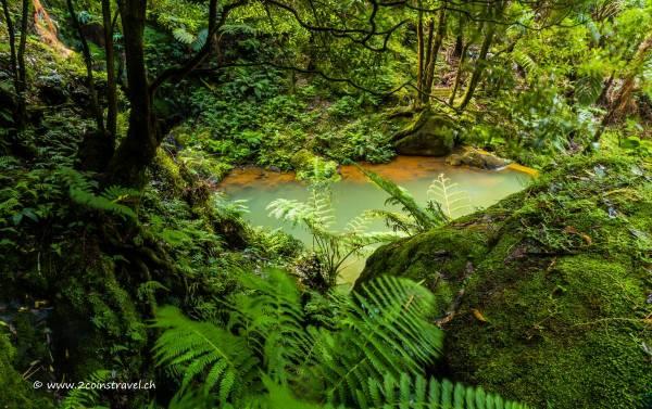Caldeira Velha Wald