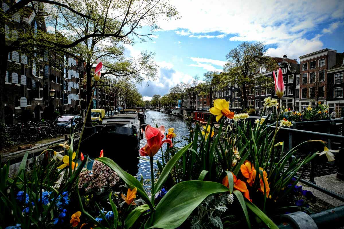 Amsterdam tra neve e sole, mulini a vento e tulipani