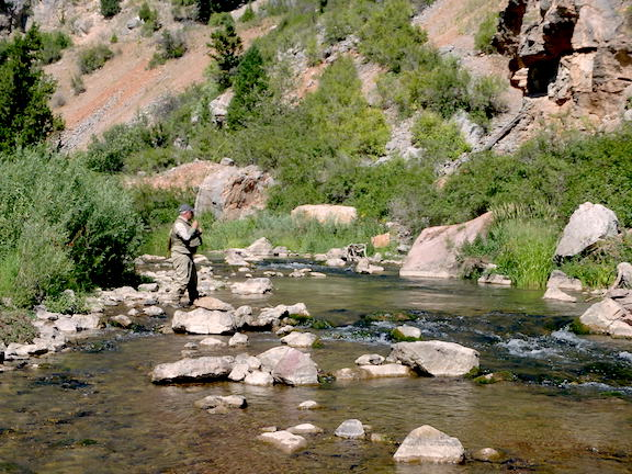 dry fly irresistible