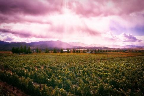 2Hawk Vineyard and Winery Vineyard Purple Sky