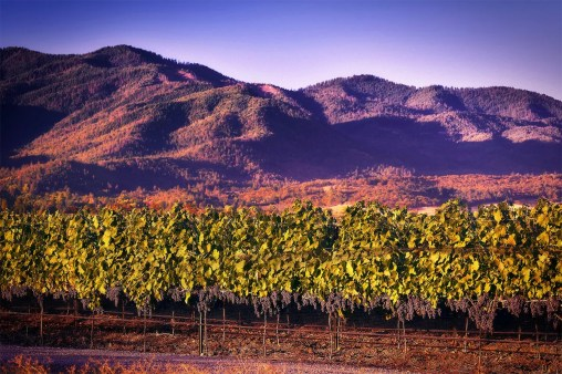 2Hawk Vineyard and Winery Vineyard with Purple Mountains