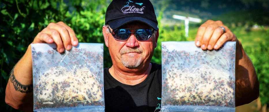 2Hawk Vineyard and Winery Owner Ross Allen Sustainable Farming with Ladybugs in Vineyard
