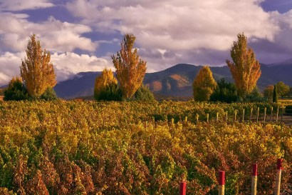 2Hawk Vineyard and Winery Autumn Vineyard, Trees, and Mountains