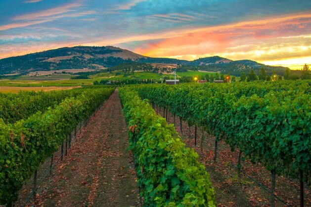 2Hawk Vineyard and Winery Vineyard at Sunset