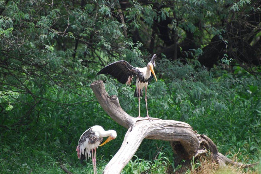 Malayalam Names Of Birds