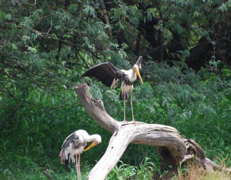 telugu birds