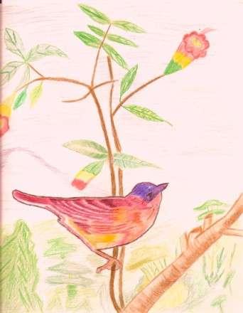 Hand Sketch using Pencil Colors