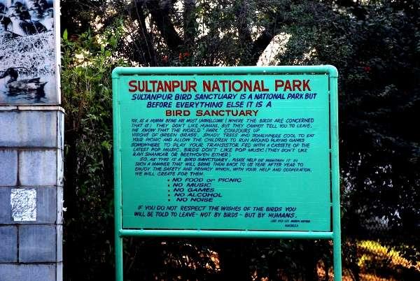 Sultanpur Bird Sanctury, Gurgaon