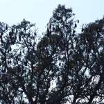 Hindi Poem on Trees for UKG Class