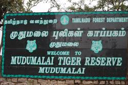 Mudumalai National Park, Ooty