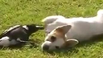 Hund og fugl som bedste legekammerater (WebTV)
