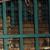 Les fauves ont été transférés au sanctuaire Al'Mawa en Jordanie. © Four Paws