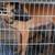 La chienne vivait dans une cage avec ses chiots. © DR