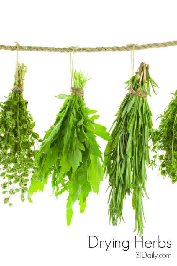 When the summer garden produces it abundance, we want to hold on to it as long as possible. Drying herbs is one way we can bring the taste of summer into the winter kitchen. Learn the difference between Less Tender Herbs and Tender-Leaf Herbs and how to preserve them at 31Daily.com.