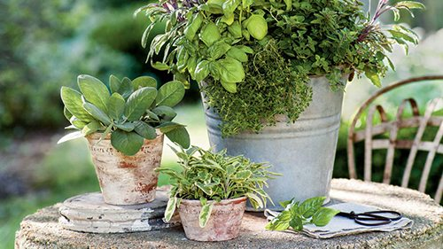 Herb Containers and Topiaries