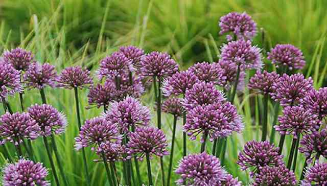 7 Top Garden Perennials New for 2016