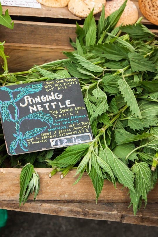 Stinging Nettle at 31Daily.com