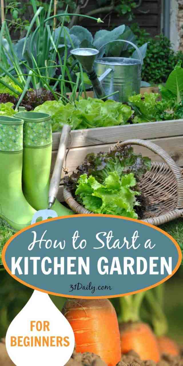 Kitchen Garden Foods How To Start A Kitchen Garden For Beginners 31 Daily
