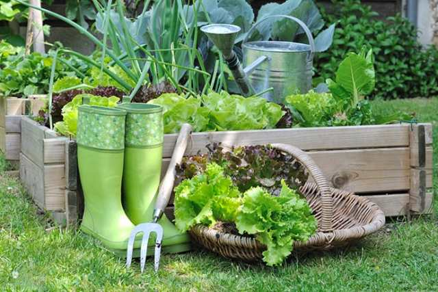 How to Start a Kitchen Garden for Beginners
