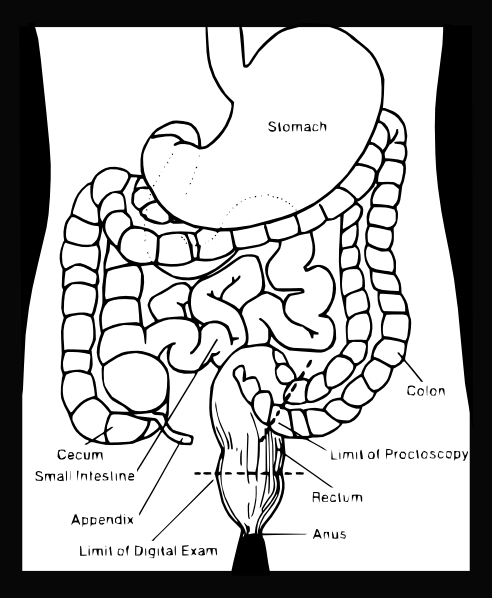 anatomy and physiology coloring pages free image . anatomy and, coloring pages