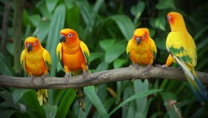 All You Need to Know About Lovebirds