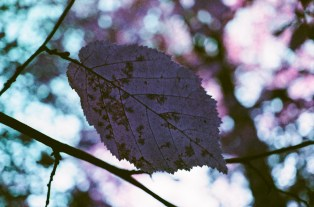 Lomo Purple-14