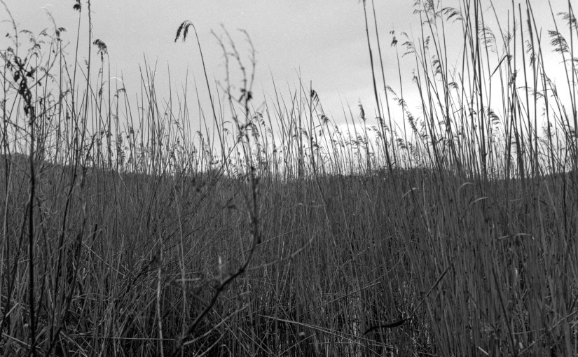Whitlingham Marshes on FP4+